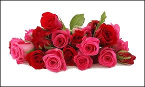 Qixi Festival Red Roses